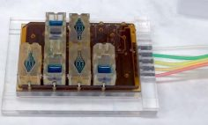 أول جهاز تناسلي أنثوي على رقاقة