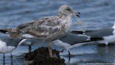 ابتكارات للتخلص من الفضلات البلاستيكية